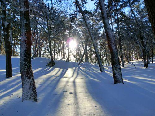 雪中の木漏れ日♪