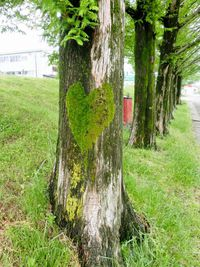 ハートの木♪