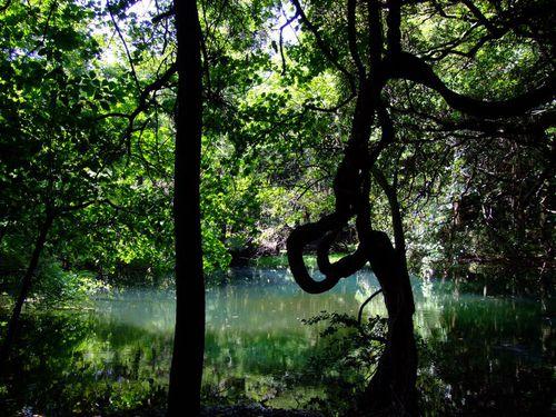 九月二日の丸池様