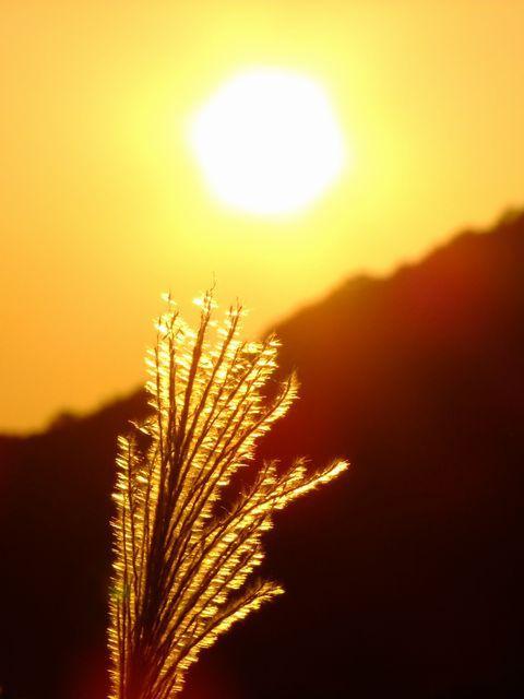 すすき野原に陽の沈む♪