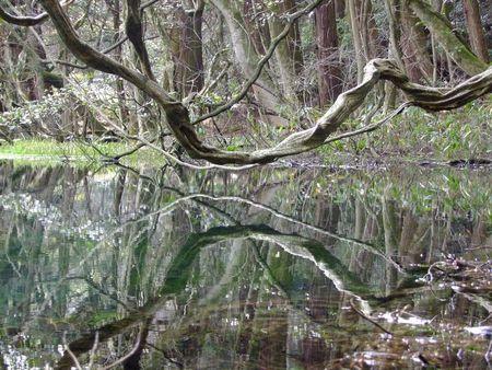 三月半ばの丸池様
