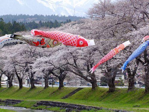 昨日の中山堤桜♪