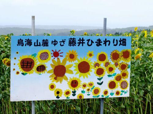 藤井ひまわり畑♪