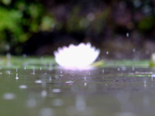 雨の玉川寺♪