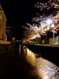 八面川夜桜♪♪♪