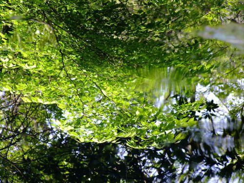 今日の丸池様♪