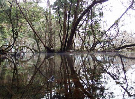 一月の丸池様