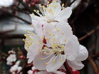 梅に春雨♪