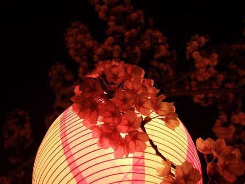川面夜桜八面川♪