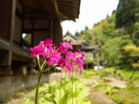五月の玉川寺