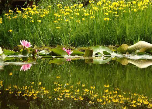 大手門と蓮の花♪