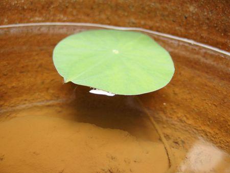 水蓮栽培セット