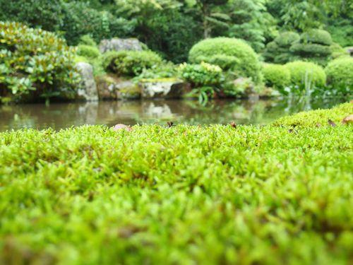 雨の合間の玉川寺