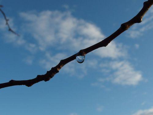 今朝の散歩と水滴と♪