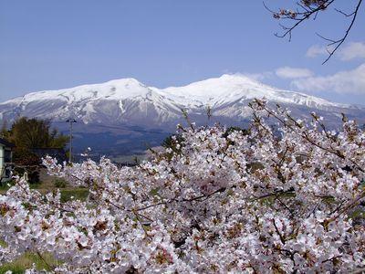 桜ごしの鳥海~私的遊佐桜めぐり ⑥~