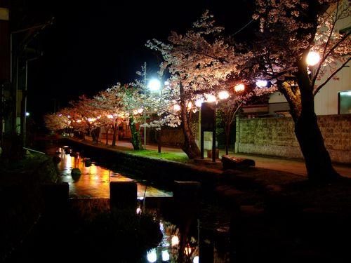 八面川夜桜散歩