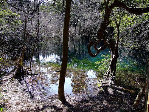 三月の丸池様