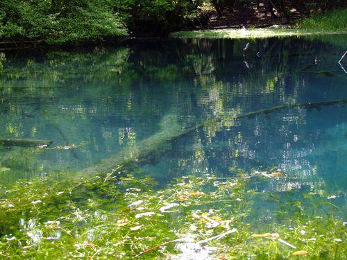 幽玄の丸池様