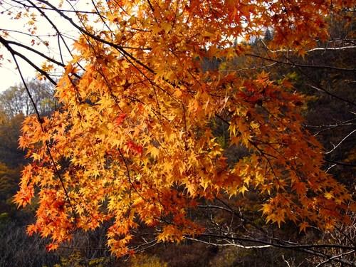 紅葉の米の粉の滝