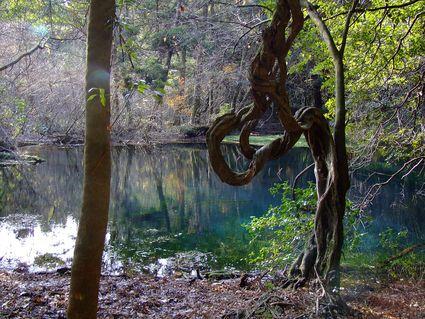 初冬の丸池様