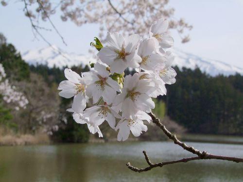桜の宮山坂公園