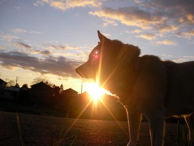 夕陽とチコ婆