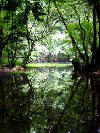 八月の丸池様