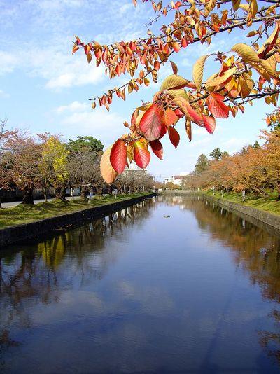錦秋の鶴岡公園