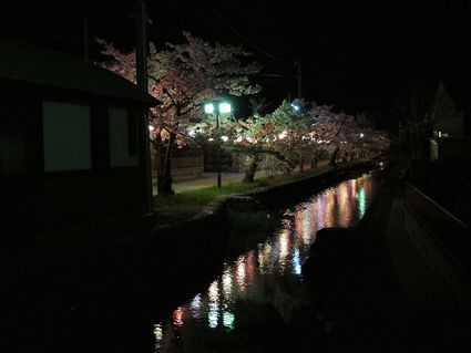 八面川水鏡夜桜散歩