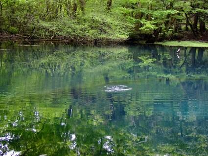 神の魚、跳ねる ~五月の丸池様~