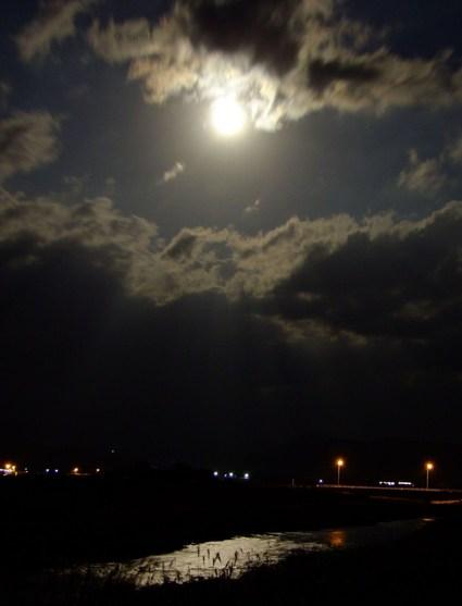 薄(すすき)月夜