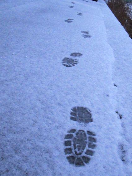 今朝の足跡