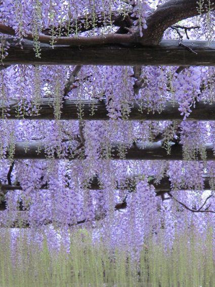 第21回 ふじの花まつり