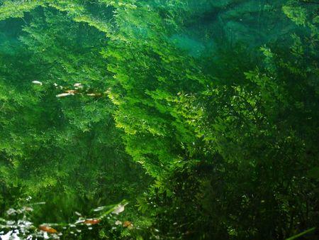 万緑の丸池様