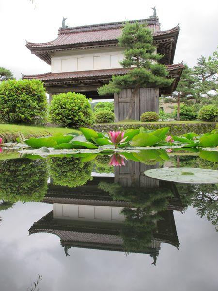 松山歴史公園の睡蓮