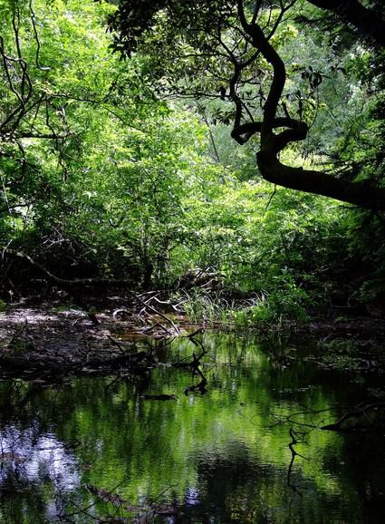 六月の丸池様