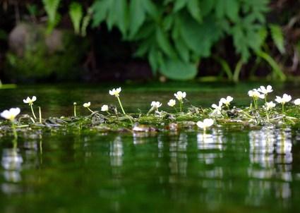 六月の牛渡川