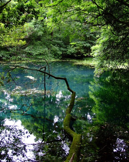 七月の丸池様
