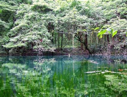 九月の丸池様