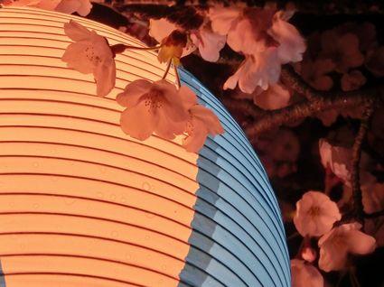 八面川夜桜散策