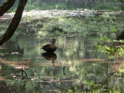 五月の丸池様