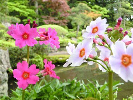 5月の玉川寺