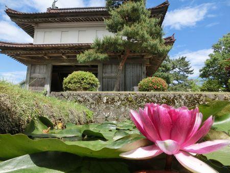 松山歴史公園の睡蓮♪