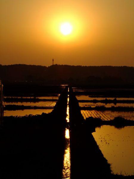 菜の花と鳥海と夕陽と