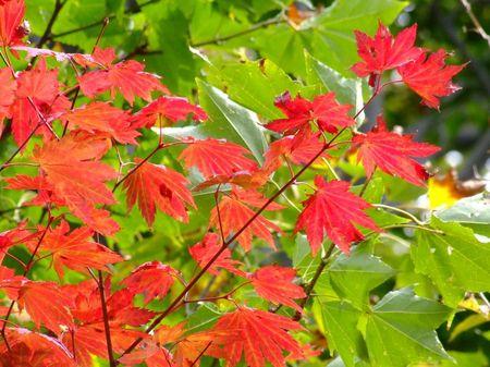 鳥海高原ライン紅葉さがし♪