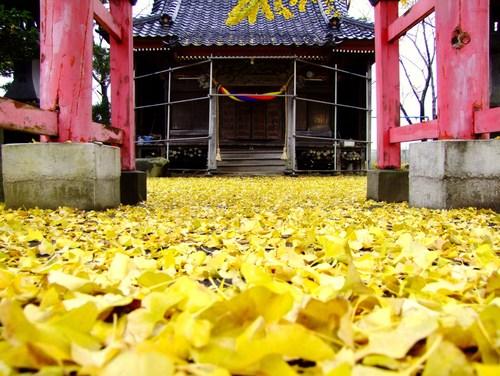 ♪公孫樹の神社♪