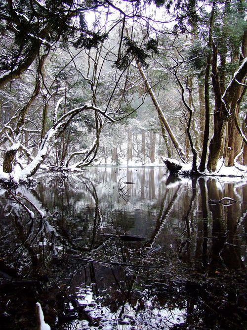 二月の丸池様