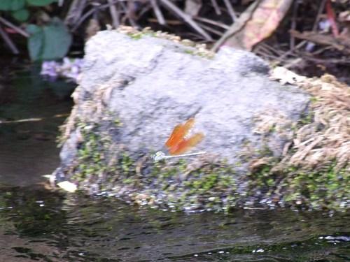 水明の牛渡川