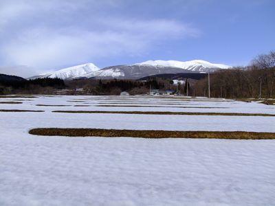 三ノ俣の春