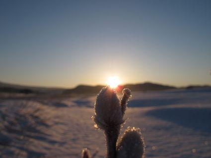 朝明けの鳥海山